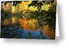 Out Of The Woods Greeting Card by LeeAnn McLaneGoetz McLaneGoetzStudioLLCcom