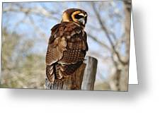 Owl In A Tree Greeting Card by Paulette Thomas