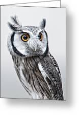 Owl Greeting Card by Jen Morrison
