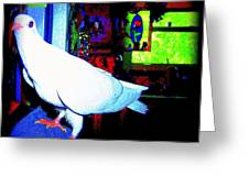 Owl Pigeon Greeting Card by YoMamaBird Rhonda