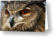 Owl Up Close Greeting Card by Paulette Thomas