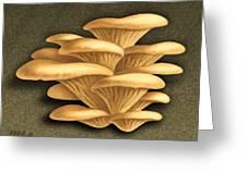 Oyster Mushrooms Greeting Card by Marshall Robinson