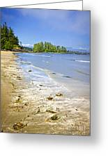 Pacific Ocean Coast On Vancouver Island Greeting Card by Elena Elisseeva
