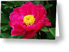 Paeony Greeting Card by Nicola Butt