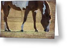 Paint Horse Greeting Card by Betty LaRue