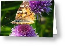 Painted lady -Vanessa Cardu Greeting Card by Bill Tiepelman