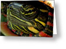 Painted Turtle Greeting Card by Griffin Harris