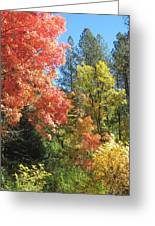 Painter's Palette Greeting Card by Sandy Tracey