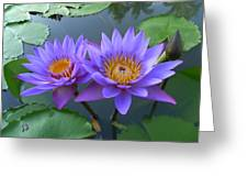 Pair Of Purple Lotuses Greeting Card by Gregory Smith