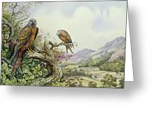 Pair Of Red Kites In An Oak Tree Greeting Card by Carl Donner