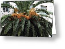 Palm at Vine Greeting Card by John Rizzuto