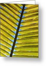 Palm Leaf Greeting Card by Chris Andruskiewicz