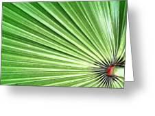 Palm Leaf Greeting Card by Rudy Umans