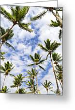 Palm Trees Greeting Card by Elena Elisseeva