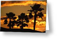 Palm Trees in Sunrise Greeting Card by Susanne Van Hulst