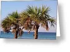 Palm Trees Greeting Card by Sandy Keeton