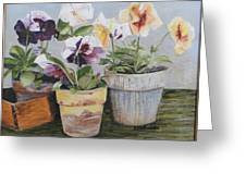 Pansies Greeting Card by Cindy Plutnicki