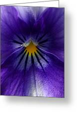 Pansy Abstract Greeting Card by Lisa  Phillips