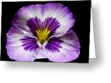 Pansy. Greeting Card by Chris  Kusik