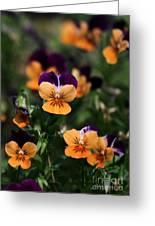 Pansy Garden Greeting Card by Sabrina L Ryan