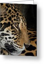 Panthera Onca In Profile Greeting Card by Sym