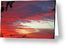Papaya Colored Sunset With Geese Greeting Card by Kym Backland