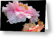 Pas De Deux Glowing Peonies Greeting Card by Lynda Lehmann