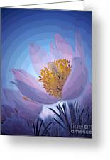 Pasque Flower Greeting Card by Vivian Christopher