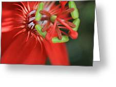 Passiflora vitifolia Scarlet Red Passion Flower Greeting Card by Sharon Mau