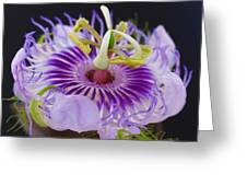 Passion Flora Greeting Card by Juergen Roth
