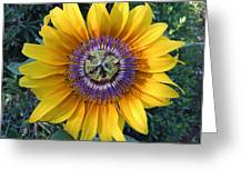 Passion For The Sun Greeting Card by Eric Kempson