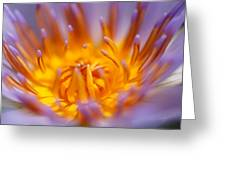 Passion Greeting Card by Ng  Hock How