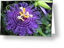 Passionflower Purple Greeting Card by Rosalie Scanlon