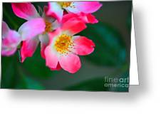 Pasture Roses  Greeting Card by Cheryl Young