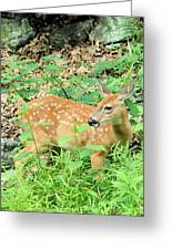 Pausing For A Snack Greeting Card by
