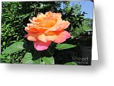 Peace Greeting Card by Jackie Popp