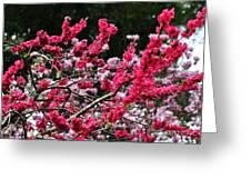 Peach Blossom Greeting Card by Kaye Menner