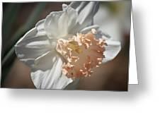 Peach Ruffle Daffodil 1 Greeting Card by Teresa Mucha