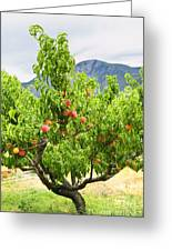 Peaches On Tree Greeting Card by Elena Elisseeva