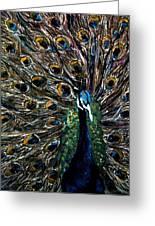 Peacock 2 Greeting Card by Amanda Dinan