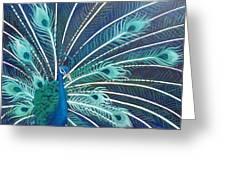 Peacock Greeting Card by Estephy Sabin Figueroa