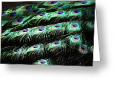 Peacock Feathers Greeting Card by Paulette Thomas