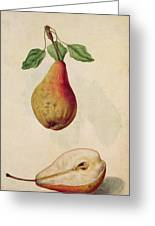 Pear   Pyrus Communis Greeting Card by J le Moyne de Morgues