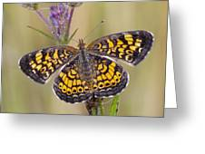 Pearl Crescent Butterfly On Wildflowers Greeting Card by Bonnie Barry
