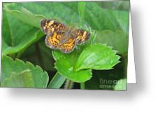 Pearl Crescent Butterfly Greeting Card by Randi Shenkman