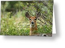Peek A Boo Greeting Card by Ernie Echols