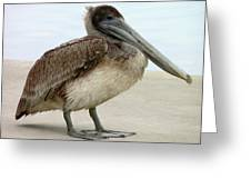 Pelican Close-up Greeting Card by Al Powell Photography USA