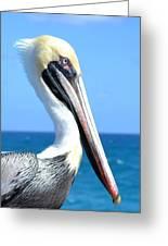 Pelican Greeting Card by Fern Korn