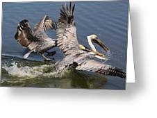 Pelican Fight Greeting Card by Paulette Thomas