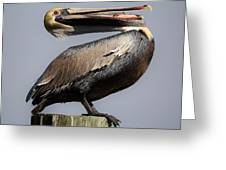 Pelican Perching Greeting Card by Paulette Thomas